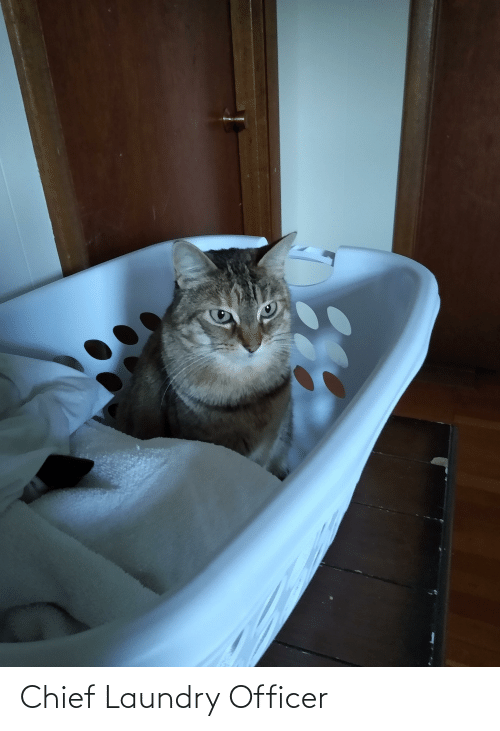 Laundry: Chief Laundry Officer