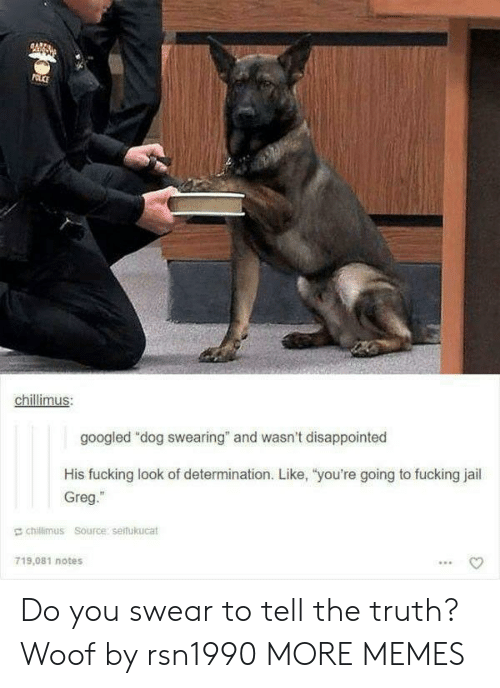 "Dank, Disappointed, and Fucking: chillimus  googled ""dog swearing"" and wasn't disappointed  His fucking look of determination. Like, ""you're going to fucking jail  Greg.""  E chillimus Source serfukucat  719,081 notes Do you swear to tell the truth? Woof by rsn1990 MORE MEMES"