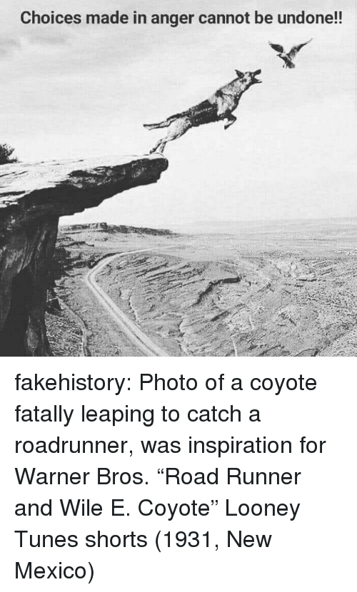 "Looney Tunes, Tumblr, and Warner Bros.: Choices made in anger cannot be undone!! fakehistory:  Photo of a coyote fatally leaping to catch a roadrunner, was inspiration for Warner Bros. ""Road Runner and Wile E. Coyote"" Looney Tunes shorts (1931, New Mexico)"