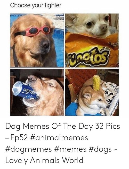 Choose Your: Choose your fighter  S157  yngios  PEPS Dog Memes Of The Day 32 Pics – Ep52 #animalmemes #dogmemes #memes #dogs - Lovely Animals World