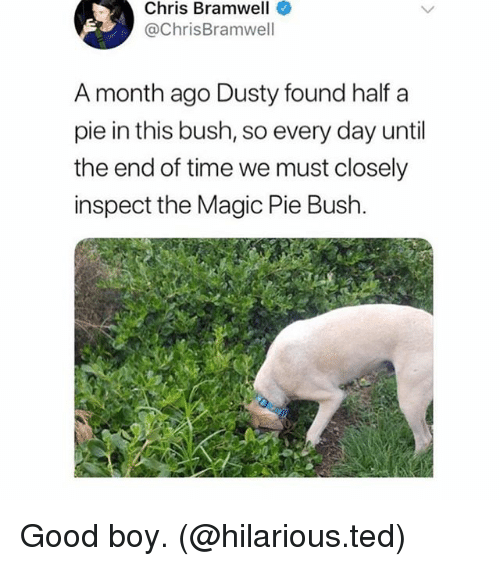Memes, Ted, and Good: Chris Bramwell  @ChrisBramwell  A month ago Dusty found half a  pie in this bush, so every day until  the end of time we must closely  inspect the Magic Pie Bush Good boy. (@hilarious.ted)