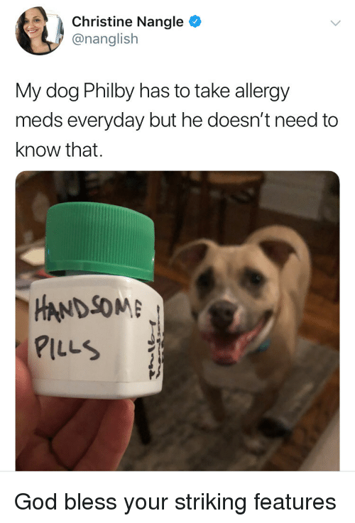 God, Dog, and Christine: Christine Nangle  @nanglish  My dog Philby has to take allergy  meds everyday but he doesn't need to  know that.  HANDSOM  PILLS God bless your striking features