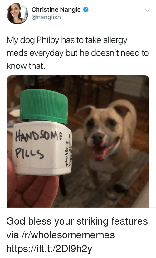 God, Dog, and Christine: Christine Nangle  @nanglish  My dog Philby has to take allergy  meds everyday but he doesn't need to  know that.  HANDSOM  PILLS God bless your striking features via /r/wholesomememes https://ift.tt/2Dl9h2y