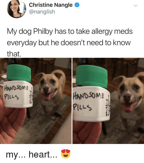 Heart, Relatable, and Dog: Christine Nangle  @nanglish  My dog Philby has to take allergy meds  everyday but he doesn't need to know  that  HANDSOME  PILLS  HANDSOME  PILLS my... heart... 😍