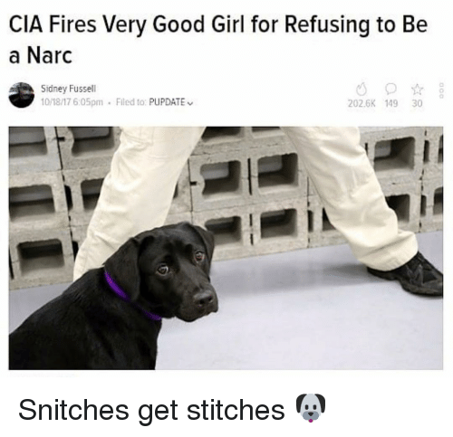 Funny, Stitches, and Girl: CIA Fires Very Good Girl for Refusing to Be  a Narc  Sidney Fussell  10/18/17 6:05pm  Flled to: PUPDATE  202.6K 149 30 Snitches get stitches 🐶