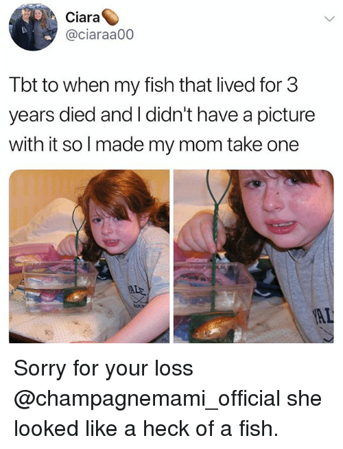 Ciara, Funny, and Sorry: Ciara  @ciaraa00  Tbt to when my fish that lived for 3  years died and I didn't have a picture  with it so l made my mom take one Sorry for your loss @champagnemami_official she looked like a heck of a fish.