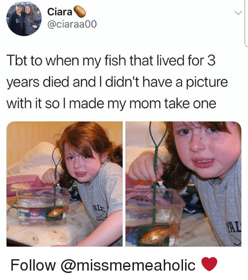 Ciara, Memes, and Tbt: Ciara  @ciaraa00  Tbt to when my fish that lived for 3  years died and I didn't have a picture  with it solmade my mom take one  ALE Follow @missmemeaholic ❤