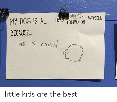 little kids: CIRCLE  HECUOMPANION  WORKER  MY DOG IS A..  BECAUSE..  he is round little kids are the best
