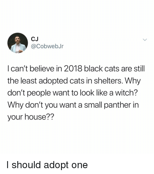Cats, Memes, and Black: CJ  @CobwebJr  I can't believe in 2018 black cats are still  the least adopted cats in shelters. Why  don't people want to look like a witch?  Why don't you want a small panther in  your house?? I should adopt one