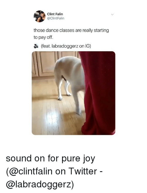 Memes, Twitter, and Dance: Clint Falin  @ClintFalin  those dance classes are really starting  to pay off.  (feat. labradoggerz on IG) sound on for pure joy (@clintfalin on Twitter - @labradoggerz)