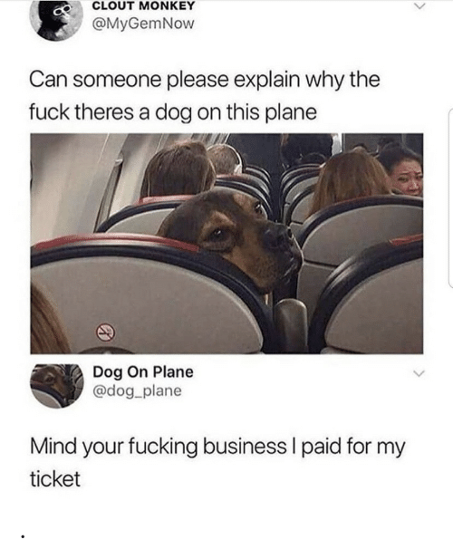 Ticket: CLOUT MONKEY  @MyGemNow  Can someone please explain why the  fuck theres a dog on this plane  Dog On Plane  @dog_plane  Mind your fucking business I paid for my  ticket .
