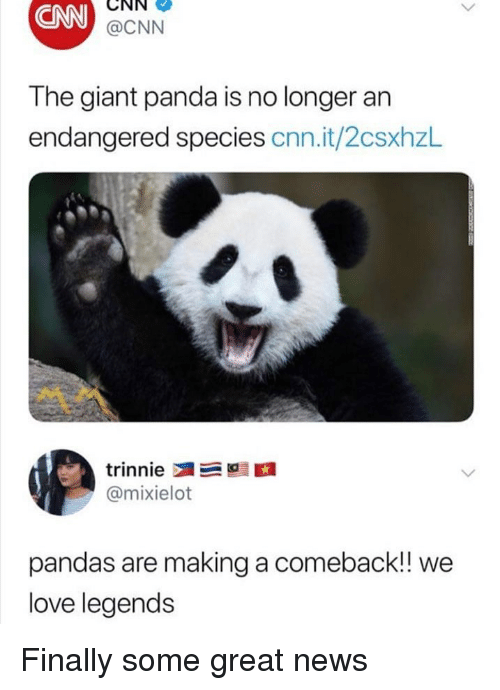 cnn.com, Love, and Memes: CNN  CNN  @CNN  The giant panda is no longer an  endangered species cnn.it/2csxhzL  @mixielot  pandas are making a comeback!! we  love legends Finally some great news
