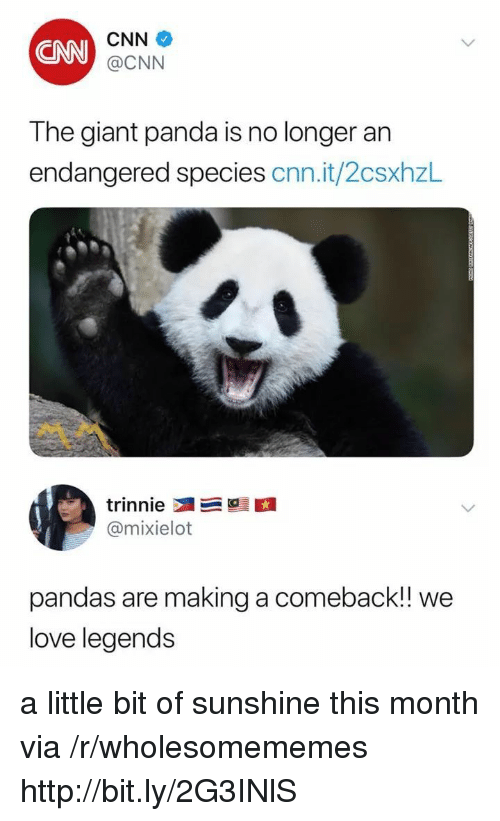 cnn.com, Love, and Panda: CNN  CNN  @CNN  The giant panda is no longer an  endangered species cnn.it/2csxhzL  @mixielot  pandas are making a comeback! we  love legends a little bit of sunshine this month via /r/wholesomememes http://bit.ly/2G3INlS