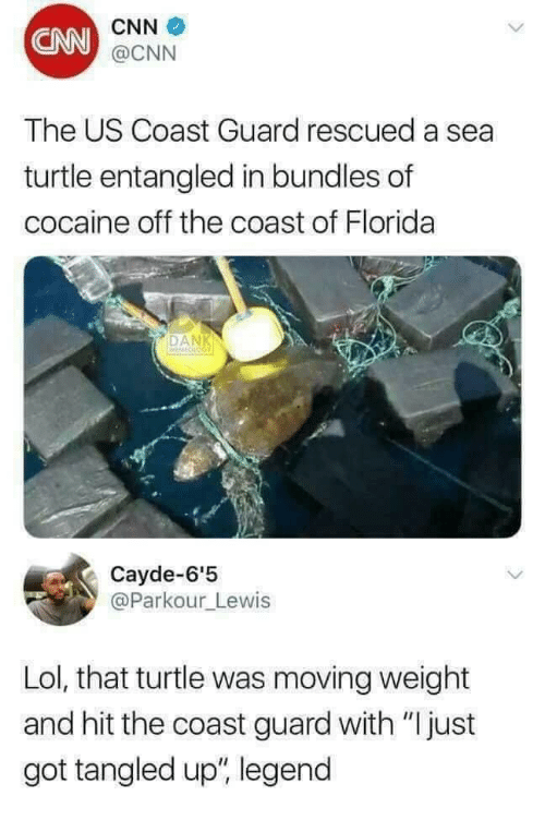 "cnn.com, Lol, and Cocaine: CNN  CNN  @CNN  The US Coast Guard rescued a sea  turtle entangled in bundles of  cocaine off the coast of Florida  DAN  Cayde-6'5  @Parkour_Lewis  Lol, that turtle was moving weight  and hit the coast guard with ""Ijust  got tangled up"", legend"