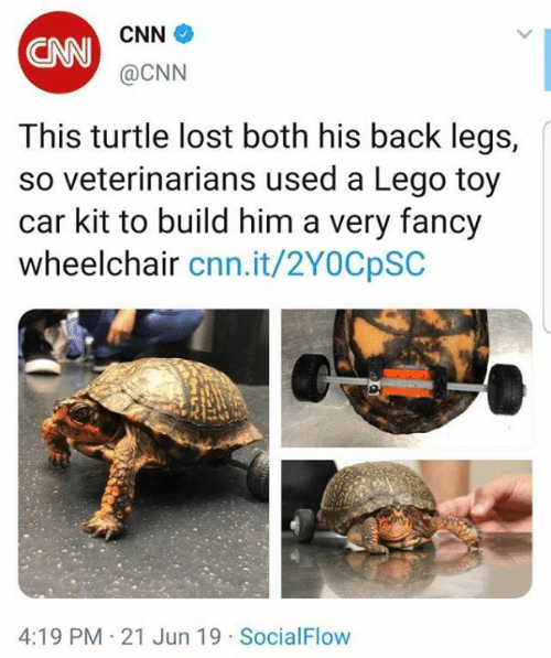 cnn.com, Dank, and Lego: CNN  CNN@CNN  This turtle lost both his back legs,  so veterinarians used a Lego toy  car kit to build him a very fancy  wheelchair cnn.it/2YOCpSC  4:19 PM 21 Jun 19 SocialFlow