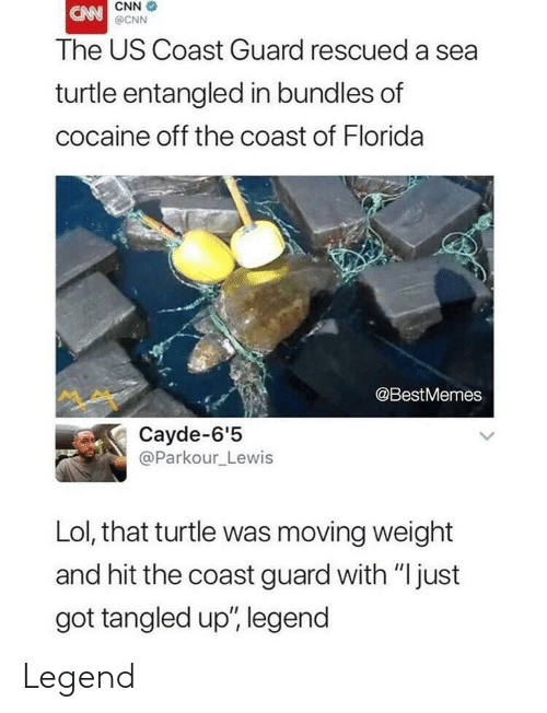 """cnn.com, Lol, and Cocaine: CNN  @CNN  The US Coast Guard rescued a sea  turtle entangled in bundles of  cocaine off the coast of Florida  @BestMemes  Cayde-6'5  @Parkour_Lewis  Lol, that turtle was moving weight  and hit the coast guard with """"just  got tangled up', legend Legend"""