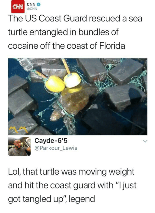 "cnn.com, Lol, and Cocaine: CNN  The US Coast Guard rescued a sea  turtle entangled in bundles of  cocaine off the coast of Florida  @CNN  ペペ  Cayde-6'!5  @Parkour_Lewis  Lol, that turtle was moving weight  and hit the coast guard with ""Ijust  got tangled up"", legend"