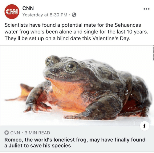 Valentine's Day: CNN  Yesterday at 8:30 PM  CNN  Scientists have found a potential mate for the Sehuencas  water frog who's been alone and single for the last 10 years.  They'll be set up on a blind date this Valentine's Day.  CNN-3 MIN READ  Romeo, the world's loneliest frog, may have finally found  a Juliet to save his species