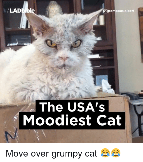 Grumpy Cats: CO pompous albert  The USA's  Moodiest Cat Move over grumpy cat 😂😂
