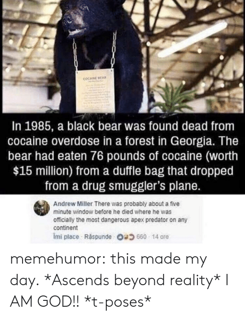 God, Tumblr, and Apex: COCAINE EA  In 1985, a black bear was found dead from  cocaine overdose in a forest in Georgia. The  bear had eaten 76 pounds of cocaine (worth  $15 million) from a duffle bag that dropped  from a drug smuggler's plane.  Andrew Miller There was probably about a five  minute window before he died where he was  officially the most dangerous apex predator on any  continent  imi place . Răspunde 680 14 ore memehumor:  this made my day.  *Ascends beyond reality* I AM GOD!! *t-poses*