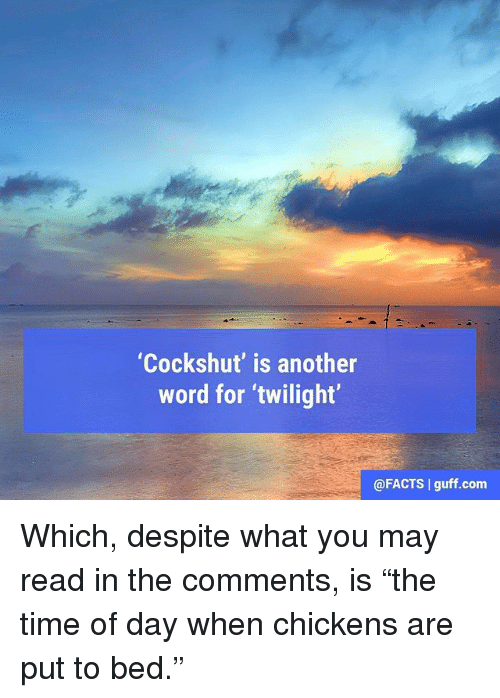"""Facts, Memes, and Time: """"Cockshut' is another  word for twilight  @FACTS l guff.com Which, despite what you may read in the comments, is """"the time of day when chickens are put to bed."""""""