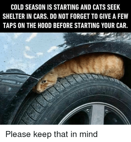 Cars, Cats, and Dank: COLD SEASON IS STARTING AND CATS SEEK  SHELTER IN CARS. DO NOT FORGET TO GIVE A FEW  TAPS ON THE HOOD BEFORE STARTING YOUR CAR, Please keep that in mind