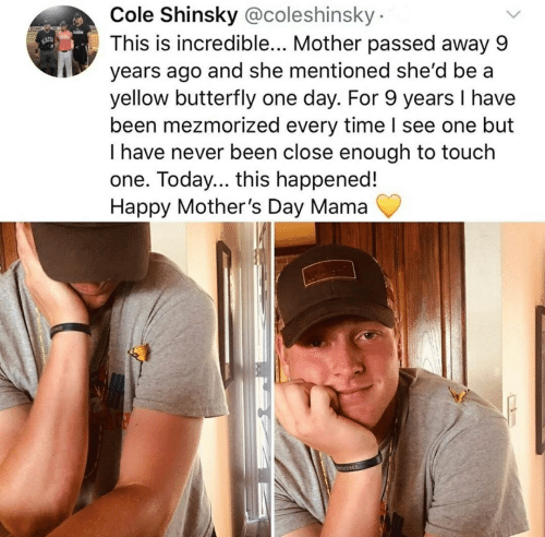 Mother's Day, Butterfly, and Happy: Cole Shinsky @coleshinsky  This is incredible... Mother passed away 9  years ago and she mentioned she'd be a  yellow butterfly one day. For 9 years I have  been mezmorized every time I see one but  I have never been close enough to touch  one. Today... this happened!  Happy Mother's Day Mama  decusED