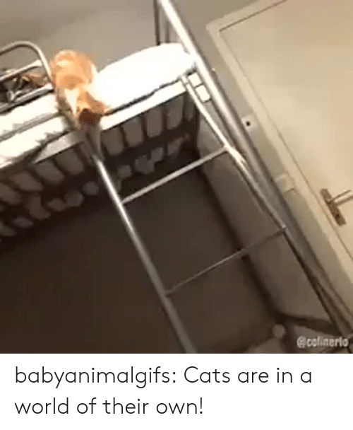 Cats, Tumblr, and Blog: @colinerio babyanimalgifs: Cats are in a world of their own!