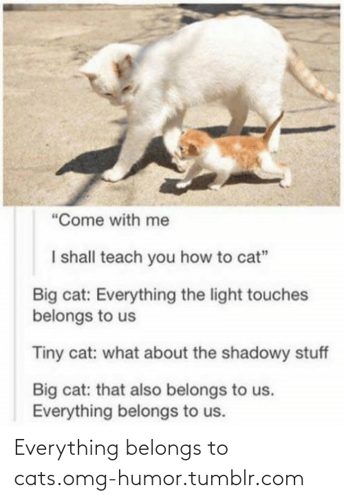 """Shadowy: """"Come with me  I shall teach you how to cat""""  Big cat: Everything the light touches  belongs to us  Tiny cat: what about the shadowy stuff  Big cat: that also belongs to us.  Everything belongs to us. Everything belongs to cats.omg-humor.tumblr.com"""