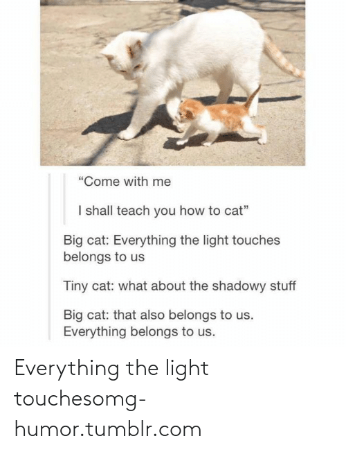 """Shadowy: """"Come with me  I shall teach you how to cat""""  Big cat: Everything the light touches  belongs to us  Tiny cat: what about the shadowy stuff  Big cat: that also belongs to us.  Everything belongs to us. Everything the light touchesomg-humor.tumblr.com"""