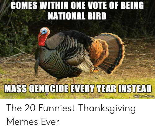 Memes, Thanksgiving, and Mass: COMES WITHIN ONE VOTE OF BEING  NATIONAL BIRD  MASS GENOCIDE EVERY YEAR INSTEAD  Weknow Memes The 20 Funniest Thanksgiving Memes Ever