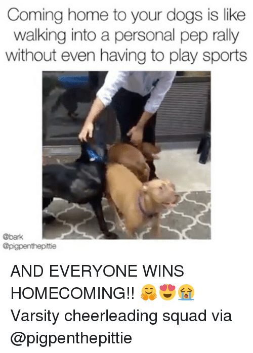 Dogs, Memes, and Sports: Coming home to your dogs is like  walking into a personal pep rally  without even having to play sports  @bark  @pigpenthepittie AND EVERYONE WINS HOMECOMING!! 🤗😍😭 Varsity cheerleading squad via @pigpenthepittie