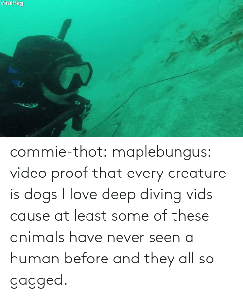 Dogs: commie-thot:  maplebungus: video proof that every creature is dogs  I love deep diving vids cause at least some of these animals have never seen a human before and they all so gagged.