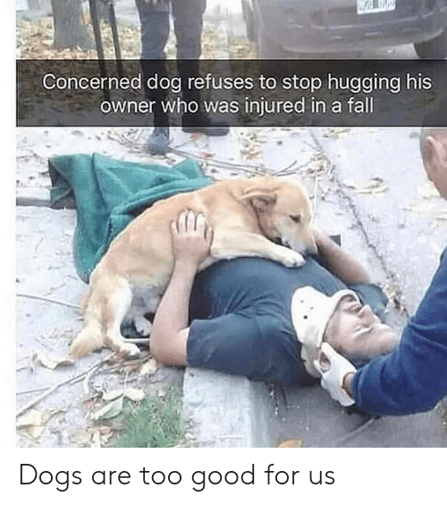Dogs, Fall, and Good: Concerned dog refuses to stop hugging his  owner who was injured in a fall Dogs are too good for us