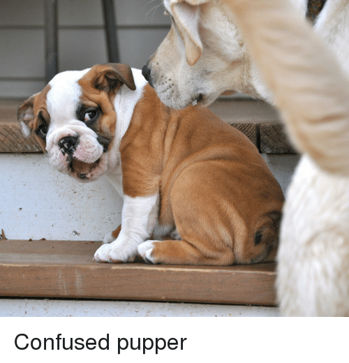 Confused and Pupper