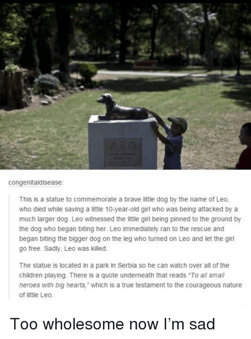 """to-the-ground: congenitaldisease  This is a statue to commemorate a brave little dog by the name of Leo,  who died while saving a little 10-year-old girl who was being attacked by a  much larger dog. Leo witnessed the little girl being pinned to the ground by  the dog who began biting her. Leo immediately ran to the rescue and  began biting the bigger dog on the leg who turned on Leo and let the girl  go free. Sadly, Leo was killed.  The statue is located in a park in Serbia so he can watch over all of the  children playing. There is a quote underneath that reads """"To all small  heroes with big hearts,"""" which is a true testament to the courageous nature  of little Leo. Too wholesome now I'm sad"""