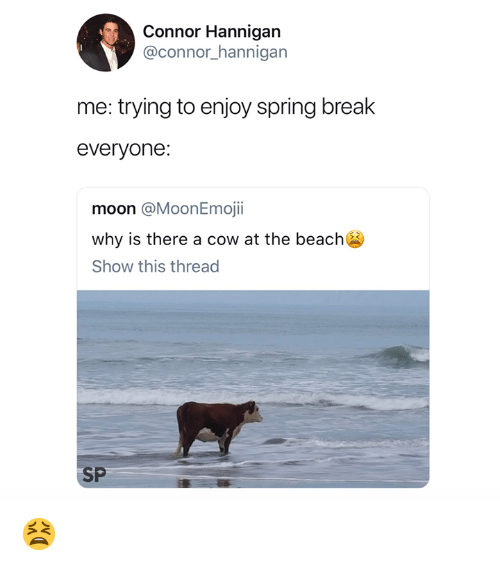 Spring Break, Beach, and Break: Connor Hannigan  @connor_hannigan  me: trying to enjoy spring break  everyone  moon @MoonEmojii  why is there a cow at the beach  Show this thread  SP 😫