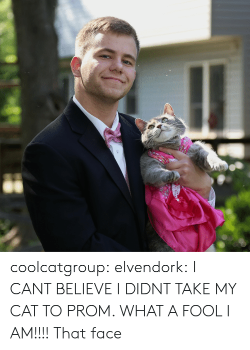 Target, Tumblr, and Blog: coolcatgroup:  elvendork:  I CANT BELIEVE I DIDNT TAKE MY CAT TO PROM. WHAT A FOOL I AM!!!!   That face