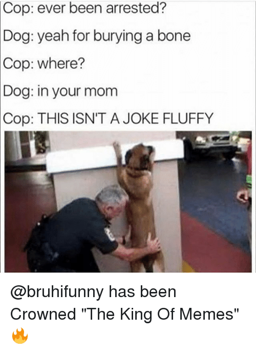 """Funny, Memes, and Yeah: Cop:  ever been arrested?  Dog: yeah for burying a bone  Cop:  where?  in your mom  THIS ISN'T A JOKE FLUFFY  Dog:  Cop: @bruhifunny has been Crowned """"The King Of Memes"""" 🔥"""