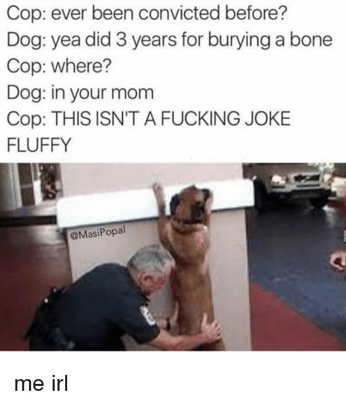 Fucking, Convicted, and Irl: Cop: ever been convicted before?  Dog: yea did 3 years for burying a bone  Cop: where?  Dog: in your mom  Cop: THIS ISN'T A FUCKING JOKE  FLUFFY  @MasiPopal me irl