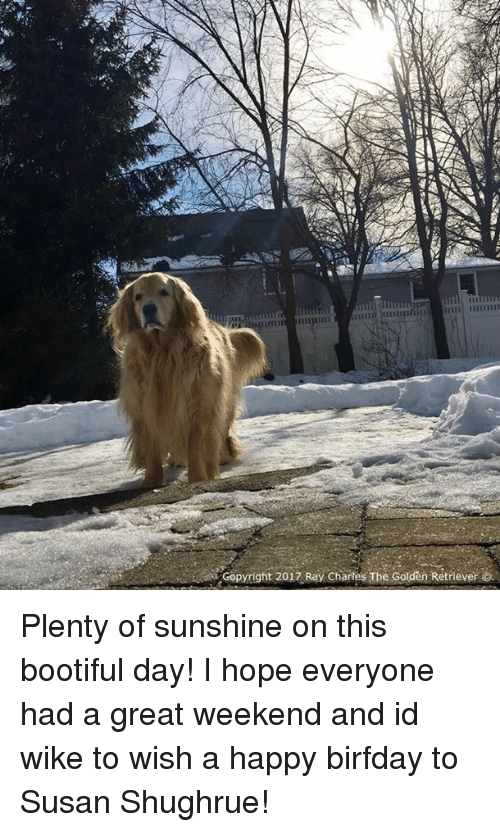 Memes, Golden Retriever, and Happy: Copyright 2017 Ray Chartes The Golden Retriever O. Plenty of sunshine on this bootiful day! I hope everyone had a great weekend and id wike to wish a happy birfday to Susan Shughrue!