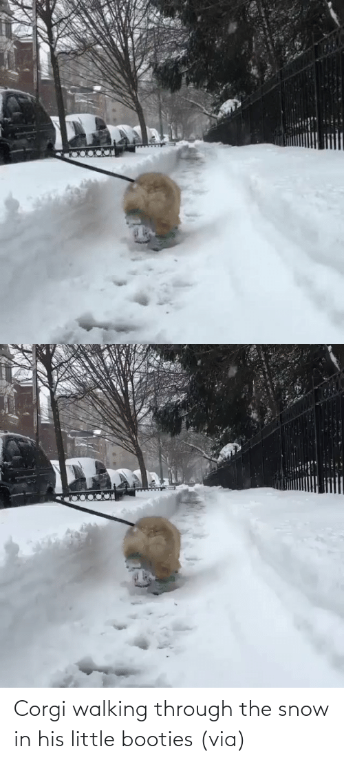 Snow: Corgi walking through the snow in his little booties (via)