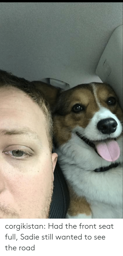 sadie: corgikistan:  Had the front seat full, Sadie still wanted to see the road