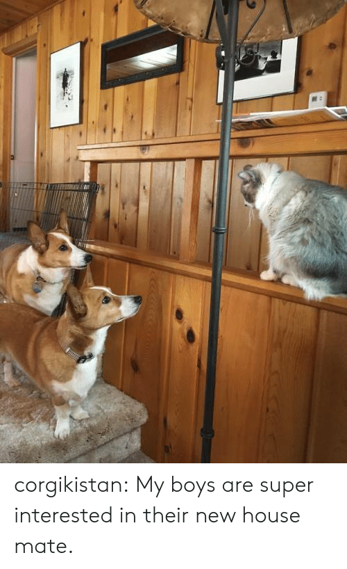 Tumblr, Blog, and House: corgikistan:  My boys are super interested in their new house mate.