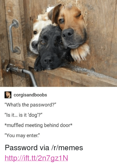 "Memes, Http, and Dog: corgisandboobs  ""What's the password?""  ""Is it... is it 'dog'?""  *muffled meeting behind door*  ""You may enter."" <p>Password via /r/memes <a href=""http://ift.tt/2n7gz1N"">http://ift.tt/2n7gz1N</a></p>"