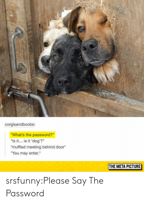 "Muffled: corgisandboobs:  What's the password?  ""Is it.. is it 'dog'?""  muffled meeting behind door  ""You may enter.  THE META PICTURE srsfunny:Please Say The Password"