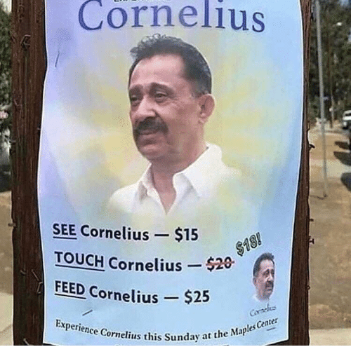 Sunday, Experience, and Touch: Cornelius  SEE Cornelius $158  TOUCH Cornelius  FEED Cornelius $25  Experience Cornelius this Sunday at  $18  nday at the Maples Center