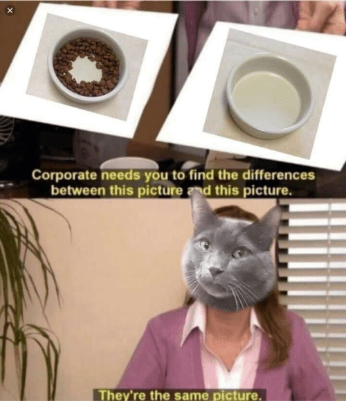 Corporate, Picture, and You: Corporate needs you to find the differences  between this picture and this picture.  They're the same picture.