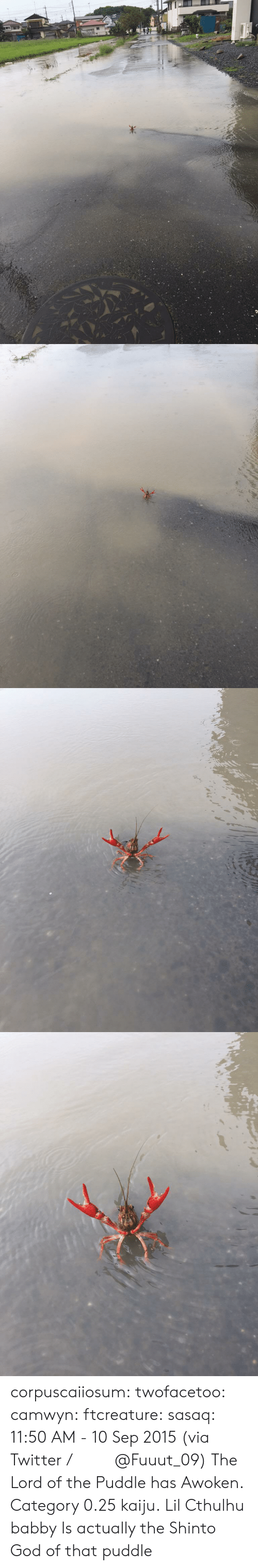 kaiju: corpuscaiiosum: twofacetoo:   camwyn:  ftcreature:  sasaq:  11:50 AM - 10 Sep 2015 (via Twitter / ふ み な @Fuuut_09)   The Lord of the Puddle has Awoken.  Category 0.25 kaiju.  Lil Cthulhu babby   Is actually the Shinto God of that puddle