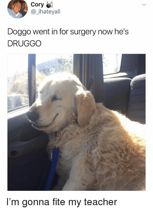 Memes, Teacher, and 🤖: Cory  @_ihateyall  Doggo went in for surgery now he's  DRUGGO I'm gonna fite my teacher